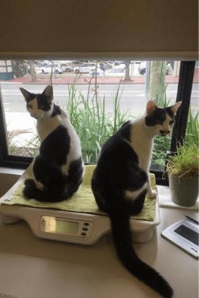 Cat Consultation