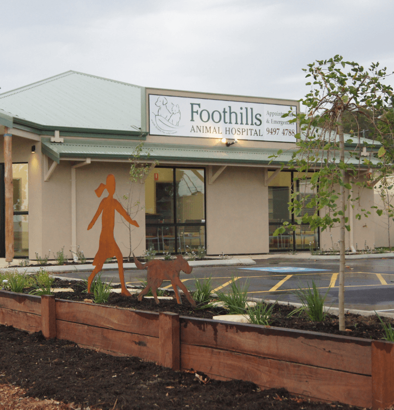 Foothills animal hospital opening