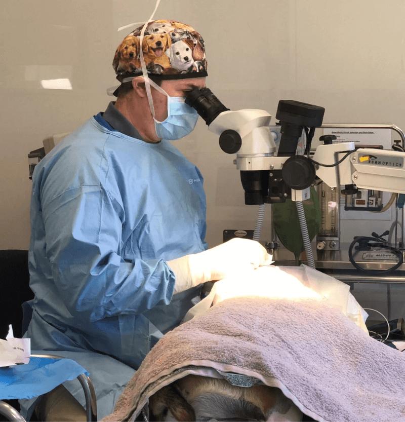Dog having eye surgery
