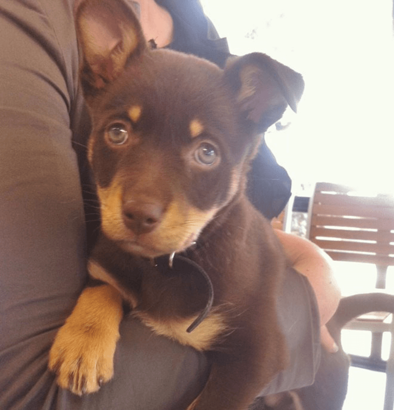 Pet Microchipping in Armadale